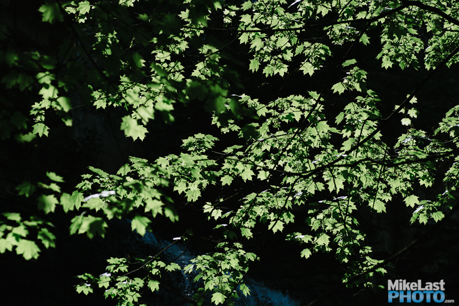 Green Leaves - Upper Chedoke Falls - Hamilton, ON