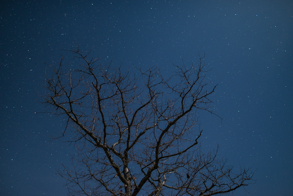Tree lit by moonlight at the Torrance Barrens Dark Sky Preserve