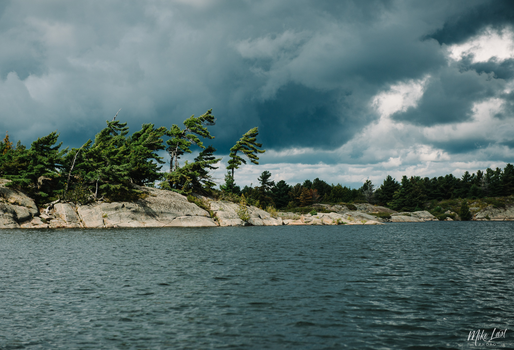 Wind Swept Pines in French River Provincial Park